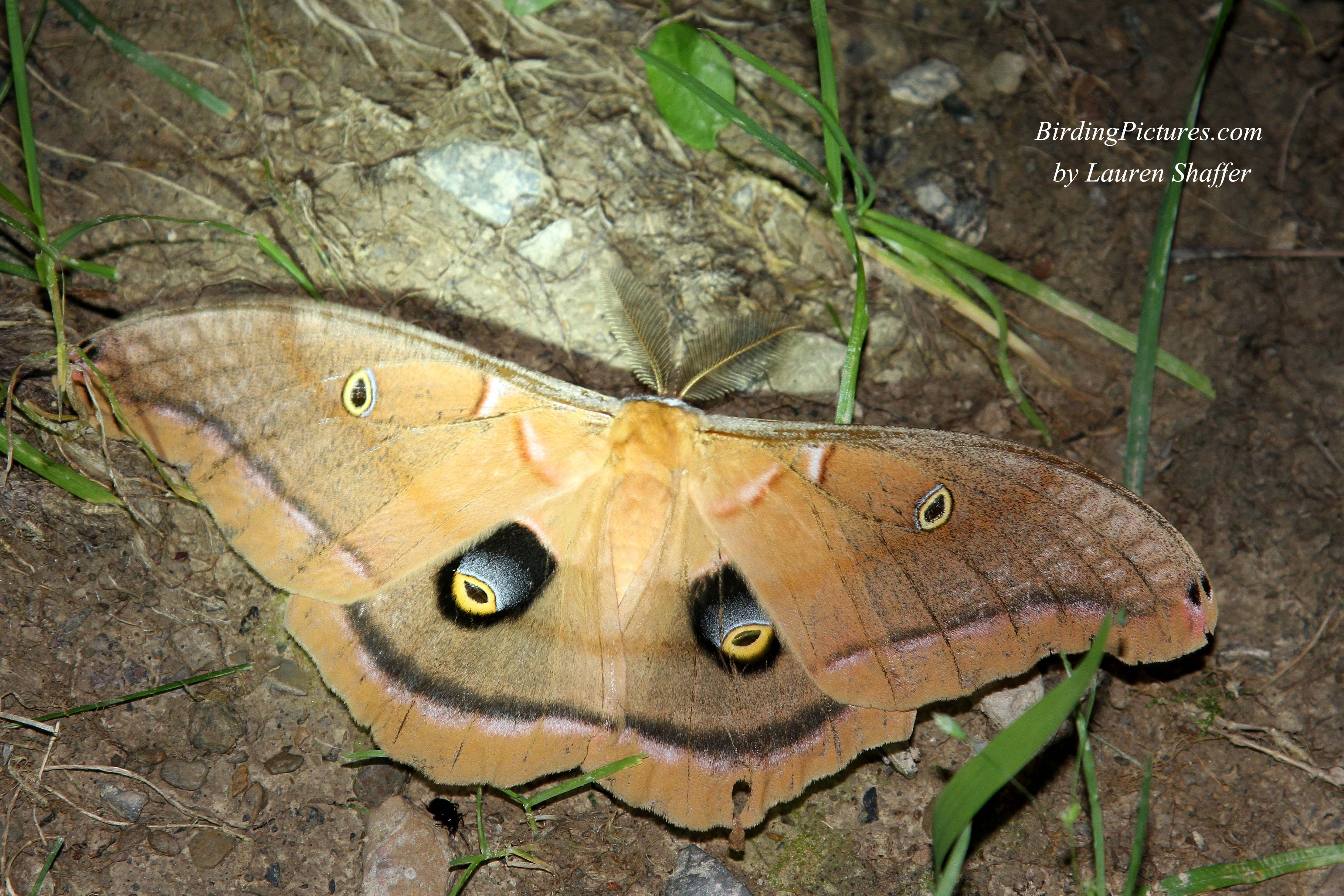 Seven Surprising Facts about Moths I learned on my First ...